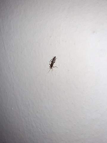 Was ist das für ein Insekt?