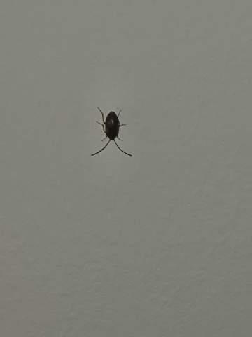 Was ist das für ein insekt an meiner Decke?