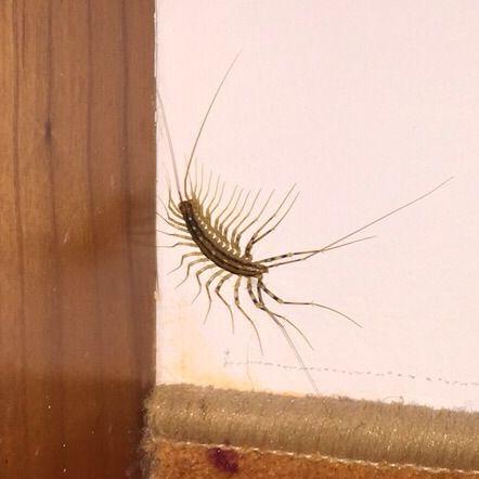 was ist das f r ein insekt assel tiere insekten k fer. Black Bedroom Furniture Sets. Home Design Ideas