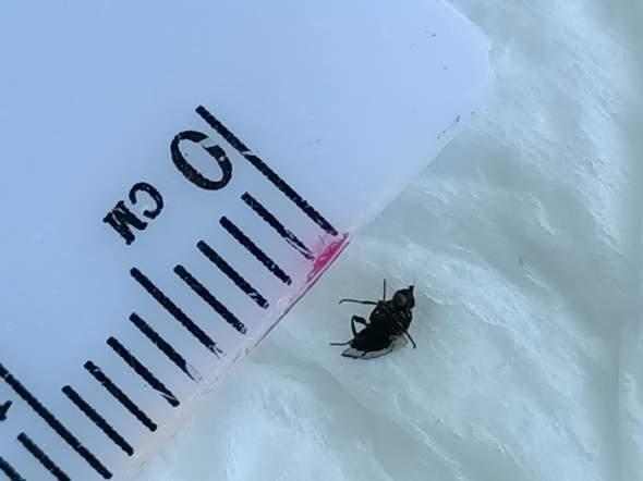 Was ist das für ein Insekt? Foto anbei?