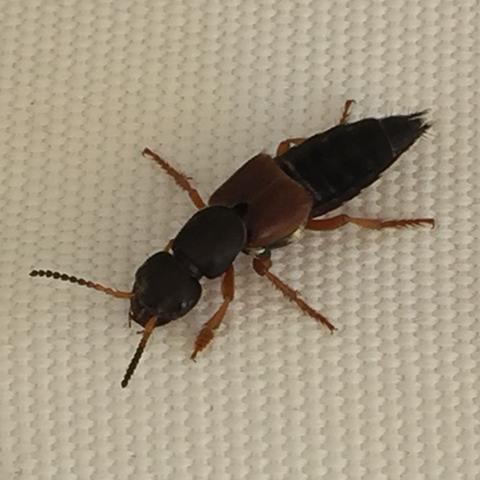 Das ist das Insekt. - (Tiere, Insekten)