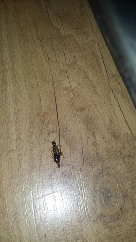 Das ist das Insekt!!! - (Insekten, Zimmer)