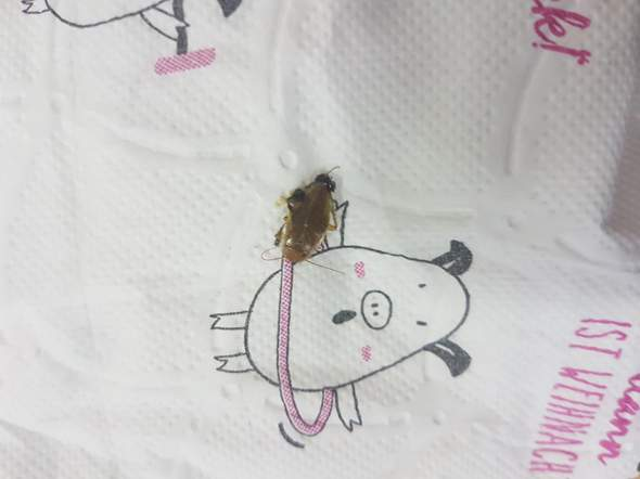 Was ist das für ein Insekt? Ist es ein Schädling? Wenn ja wie werde ich ihn los?