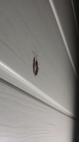 Das Insekt aus dem Profil - (Biologie, Insekten)
