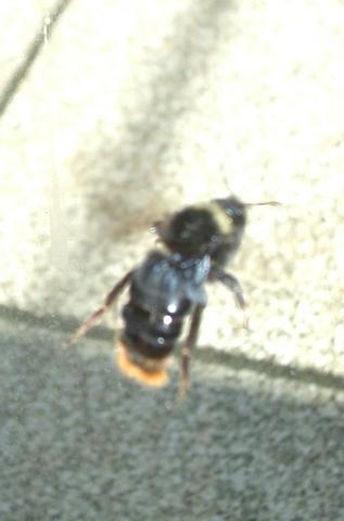 fliegend - (Tiere, Garten, Pflanzen)