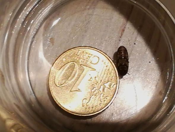 Was Ist Das Für Ein Insekt Und Wie Werde Ich Diesen