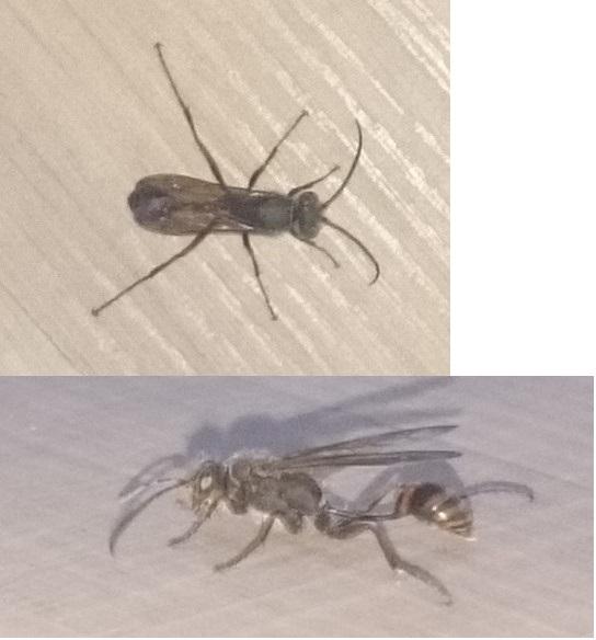 was ist das f r ein insekt und wie werde ich es los natur insekten. Black Bedroom Furniture Sets. Home Design Ideas