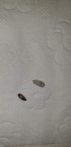 Was ist das für ein Insekt/Käfer?