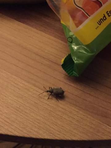 Wie Werde Ich Wespen Los : was ist das f r ein k fer wie werde ich die los insekten ~ Watch28wear.com Haus und Dekorationen
