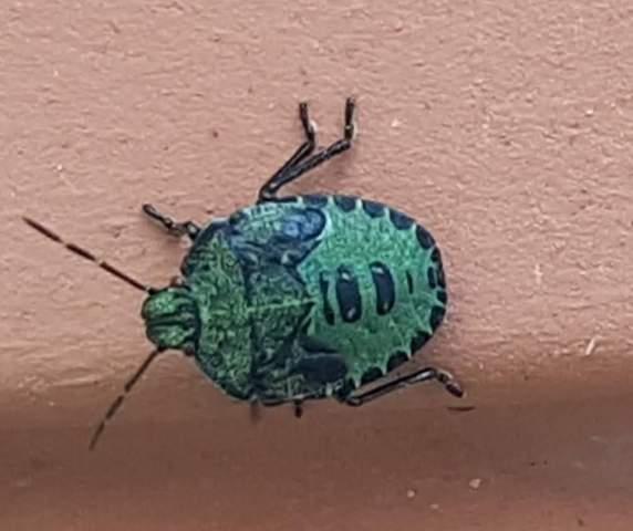 Was ist das für ein Käfer?