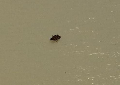 Käfer 2 - (Kaefer, Schädlinge)