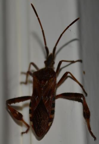 Käfer - (welcher käfer, Käfer halten)