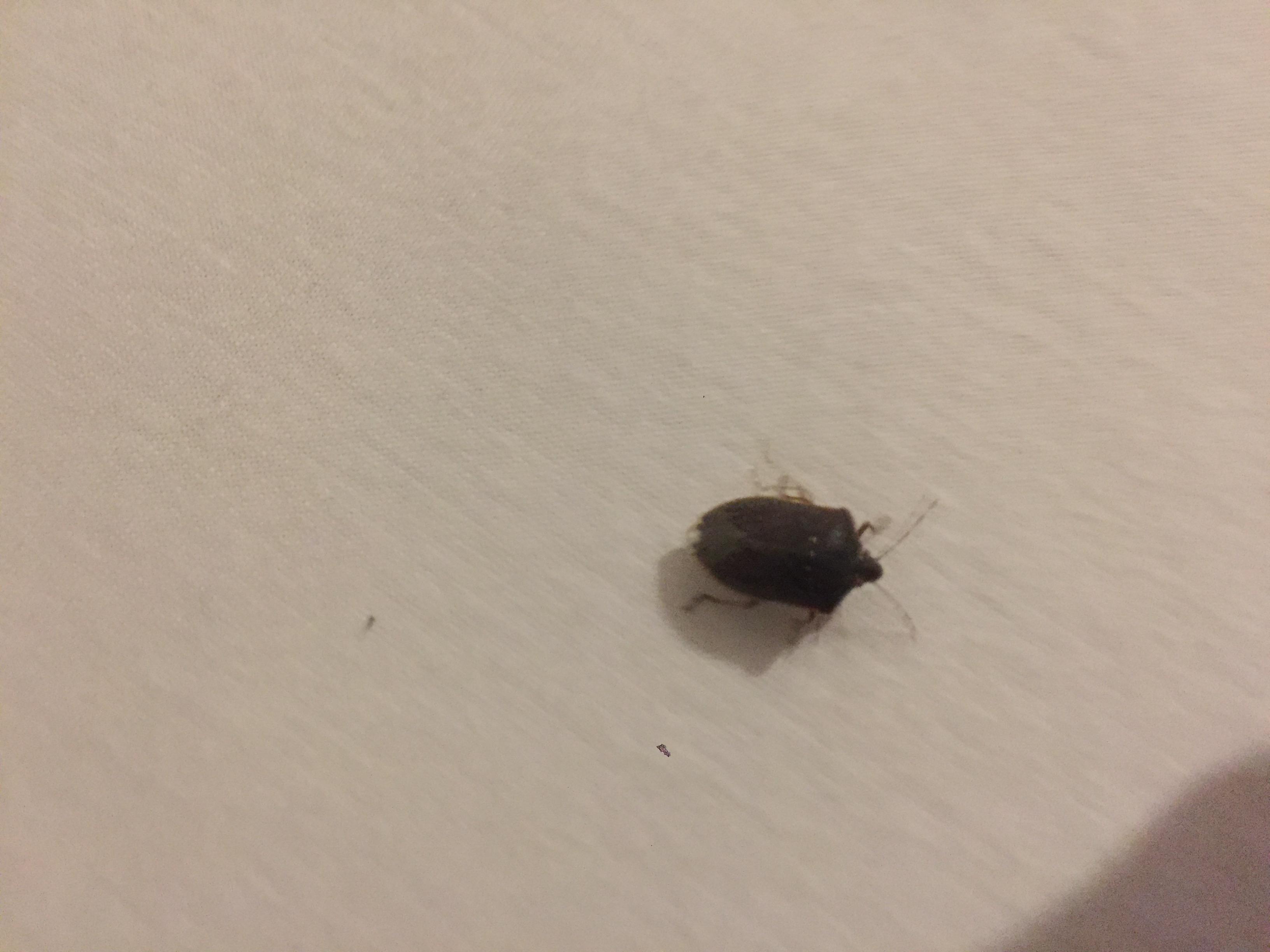 Beliebt Was ist das für ein Käfer (käfer/wanze, Bett)? (Insekten RG93