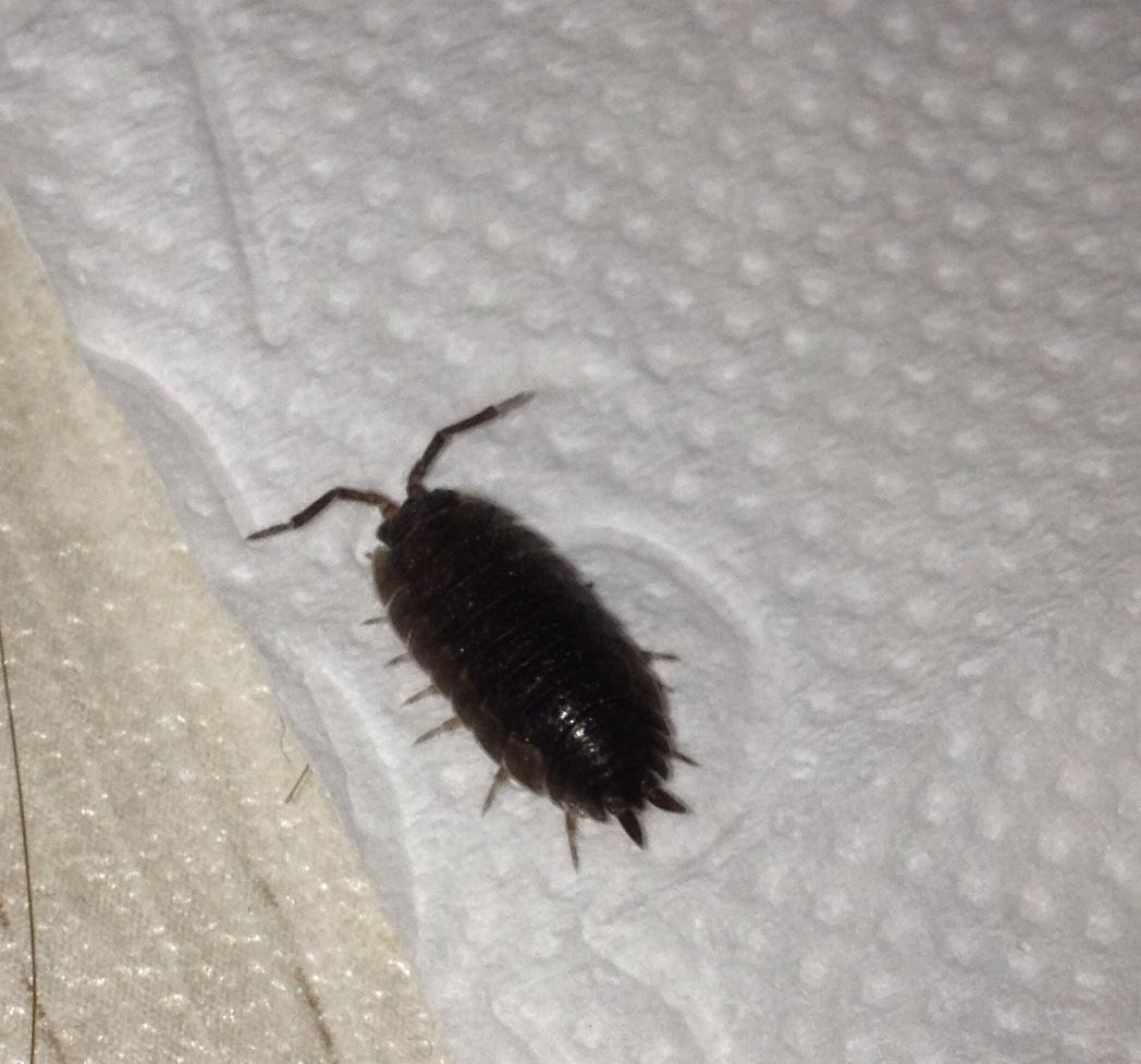 was ist das f r ein k fer s bild insekten. Black Bedroom Furniture Sets. Home Design Ideas