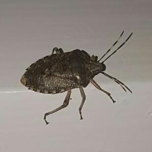 Käfer - (Kaefer, Schabe)