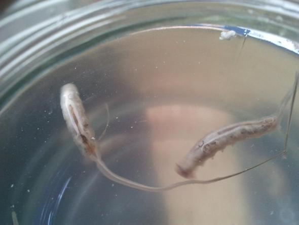 Bild 1 - (Tiere, Biologie, Wasser)