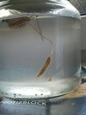 bild 2 - (Tiere, Biologie, Wasser)