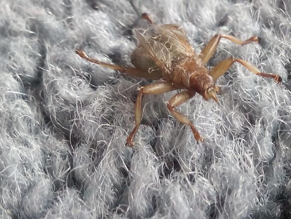 was ist das f r ein komisches frosch hnliches insekt. Black Bedroom Furniture Sets. Home Design Ideas