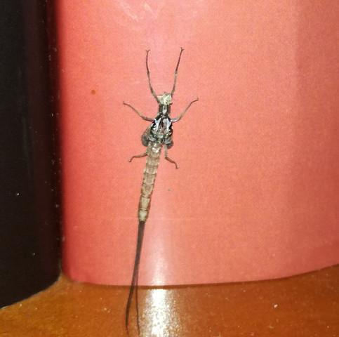 Bild 2 - (Tiere, Insekten, Ungeziefer)