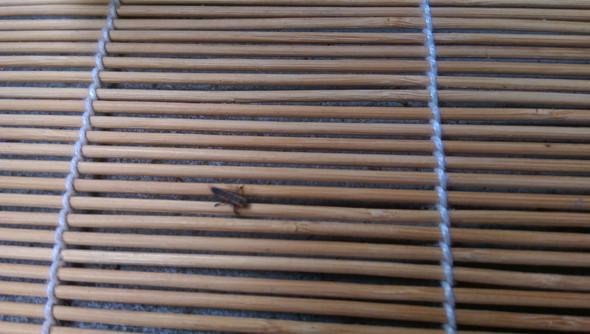 komisches Spinnentier - (Insekten, Balkon, Marienkäfer)