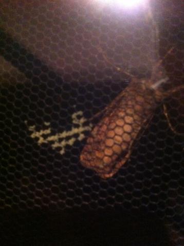 was ist das f r ein lebewesen und wie werde ich die eier wieder los tiere. Black Bedroom Furniture Sets. Home Design Ideas