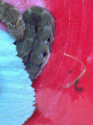 22 - (Garten, Insekten, fauna)