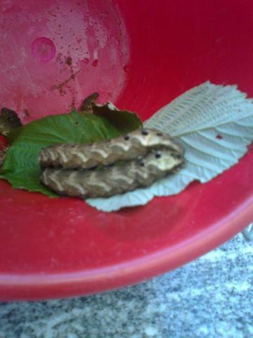 32 - (Garten, Insekten, fauna)