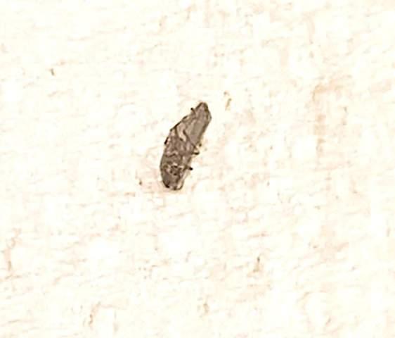 Was ist das für ein mini Insekt?