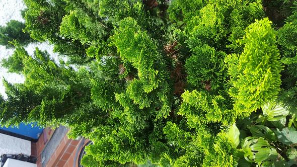 Nahaufnahme  - (Baum, Botanik)