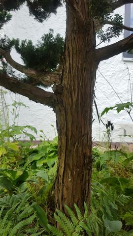 Stamm - (Baum, Botanik)
