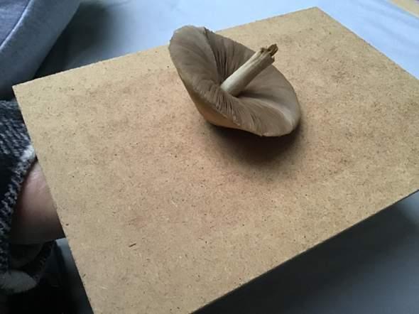 Was ist das für ein Pilz?
