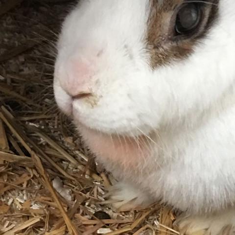 Da ist er - (Tiere, Kaninchen, Flecken)