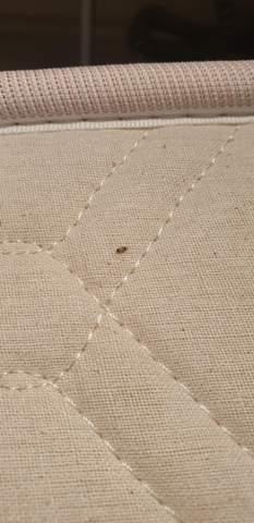 Was ist das für ein Schädling?