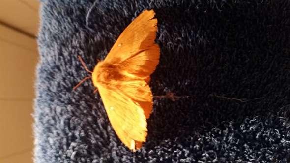 Was ist das für ein Schmetterling auf dem Foto?