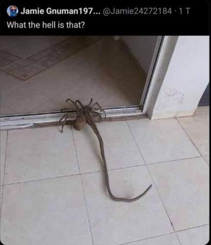 Was ist das für ein schönes Tier?