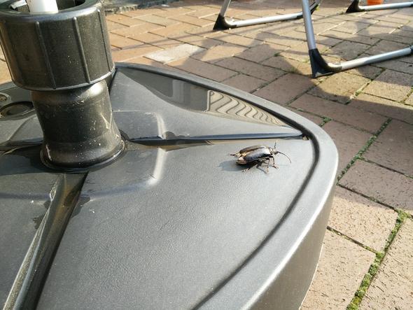 Käfer - (Insekten, Kaefer)