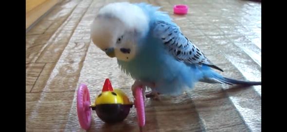 Was ist das für ein Spielzeug?