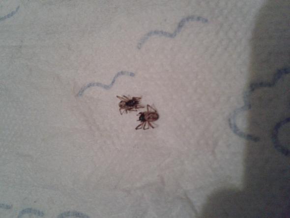 bild1 - (Tiere, Spinnen)