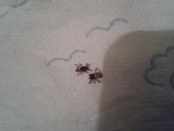 bild2 - (Tiere, Spinnen)
