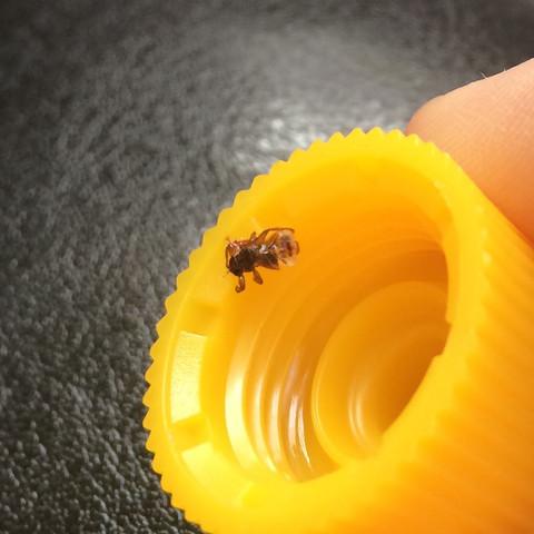 In dem gelben Deckel - (Tiere, Insekten, Läuse)