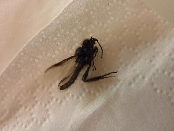insekt - (Tiere, Insekten)