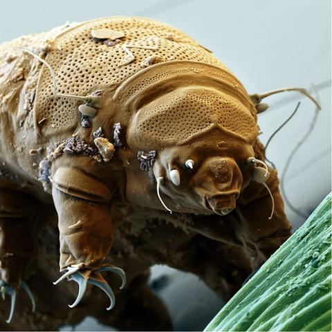 - (Tiere, Biologie)