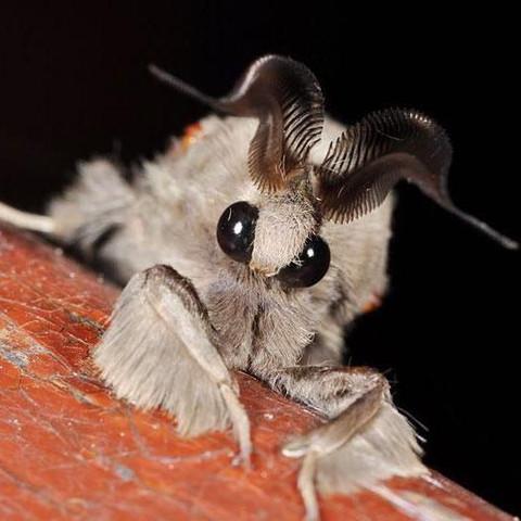 was ist das f r ein tier und wo lebt es tiere insekten. Black Bedroom Furniture Sets. Home Design Ideas
