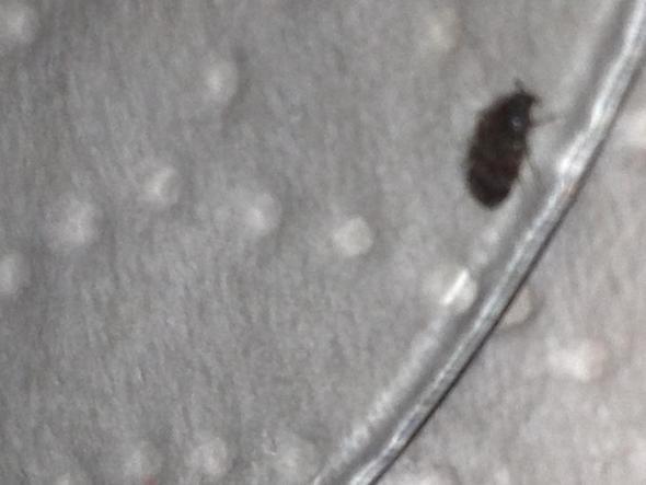 was ist das f r ein tier wanze kakerlake tiere ungeziefer l use. Black Bedroom Furniture Sets. Home Design Ideas