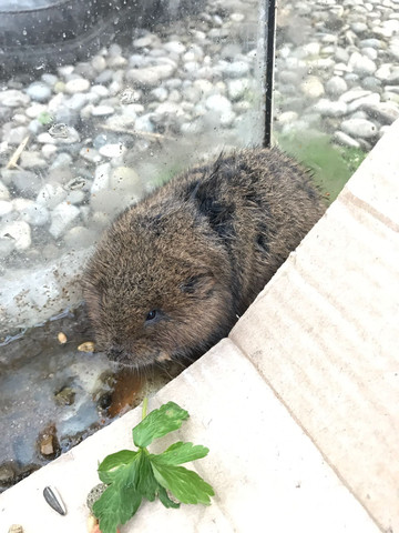 Was ist das für ein Tier(Hamster/Maus)?
