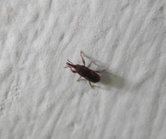 was ist das f r ein tier insekt k fer tiere insekten. Black Bedroom Furniture Sets. Home Design Ideas
