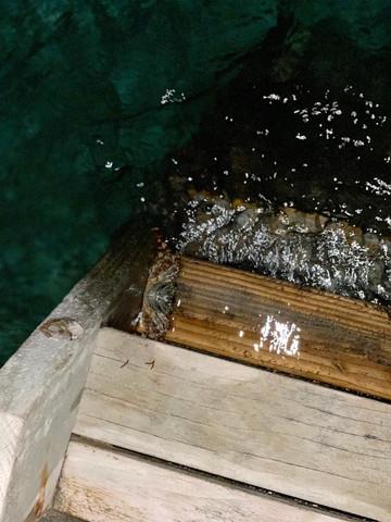 Was ist das für ein Tier(Malediven)?