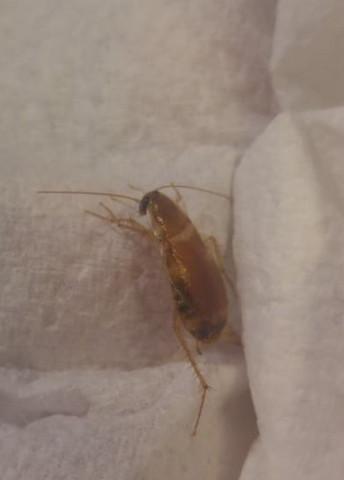Was Ist Das Fur Ein Ungeziefer Insekt Insekten Schadlinge