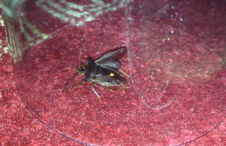 bild1 - (Insekten, Art, Kaefer)