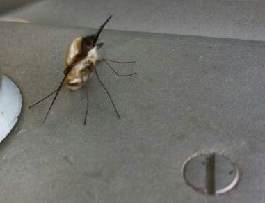 Insekten - (Insekten, viecher)
